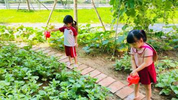 """72 39 vuon rau pic2 11zon Mô hình """"Vườn rau xanh"""" nhiều ý nghĩa của IEC Quảng Ngãi"""